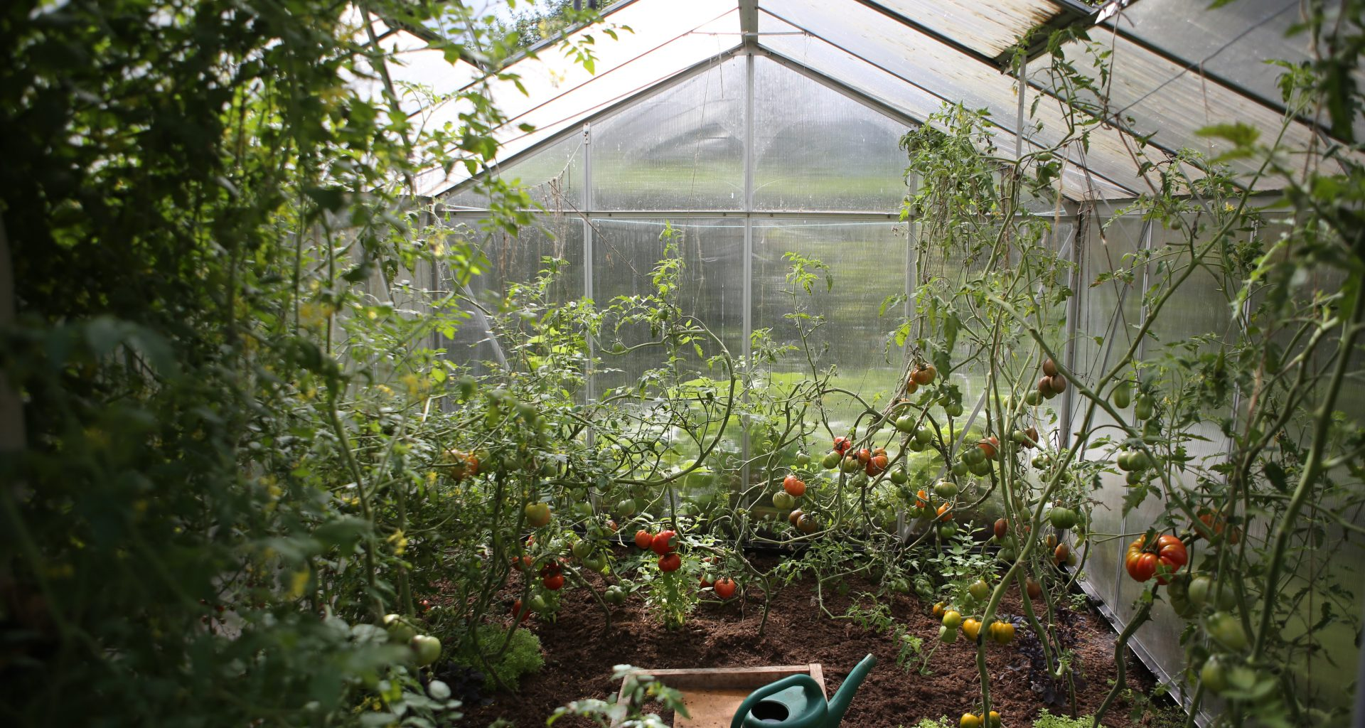 how to water your greenhouse