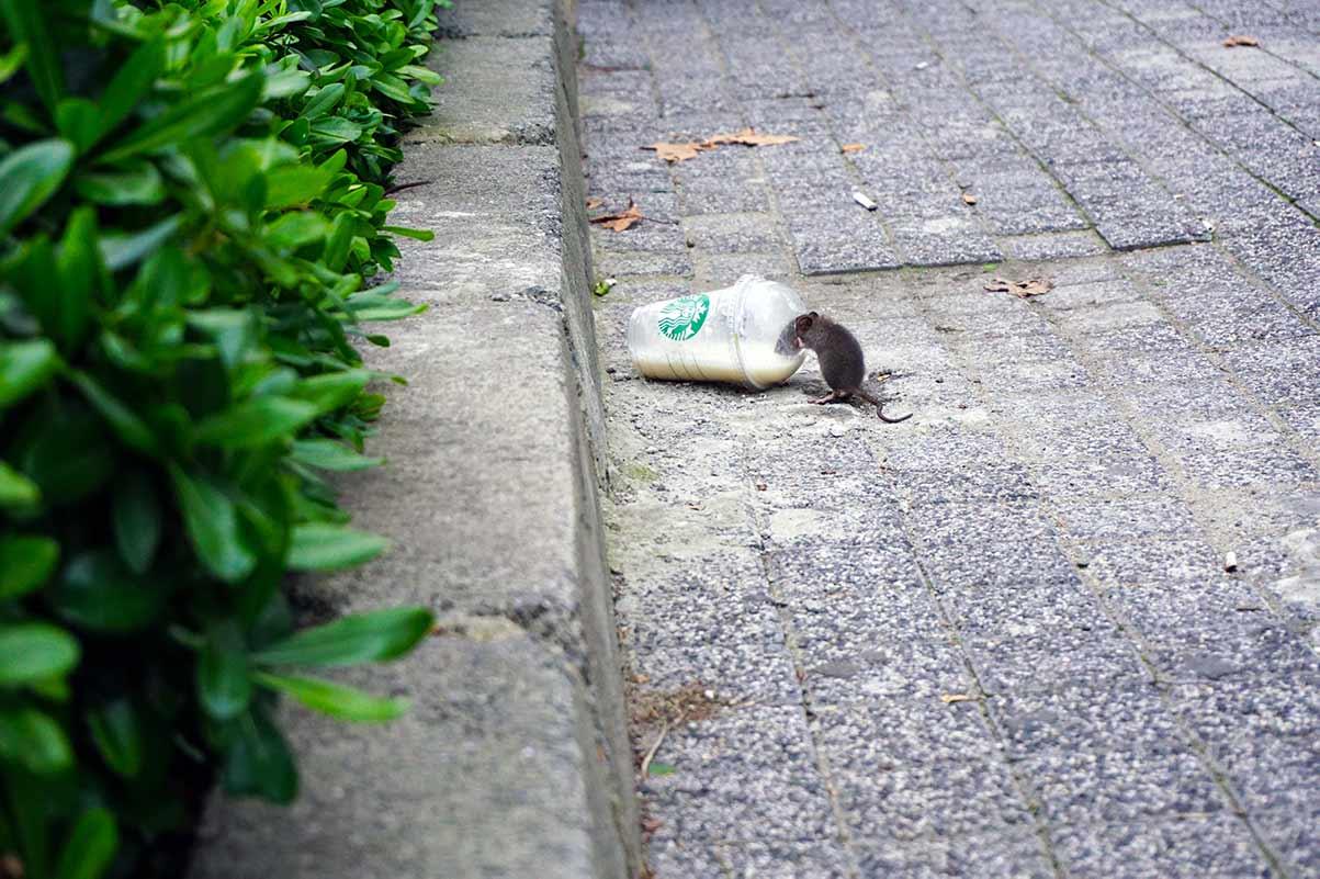 rat poison and wildlife