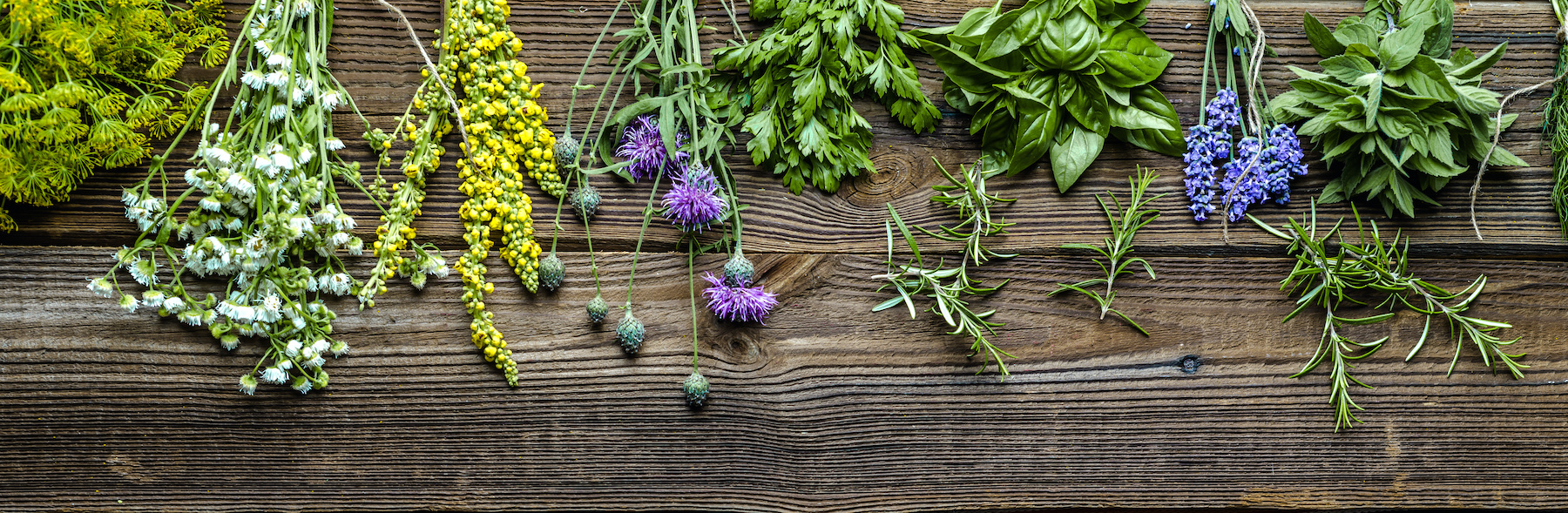 Planting a herb garden bed