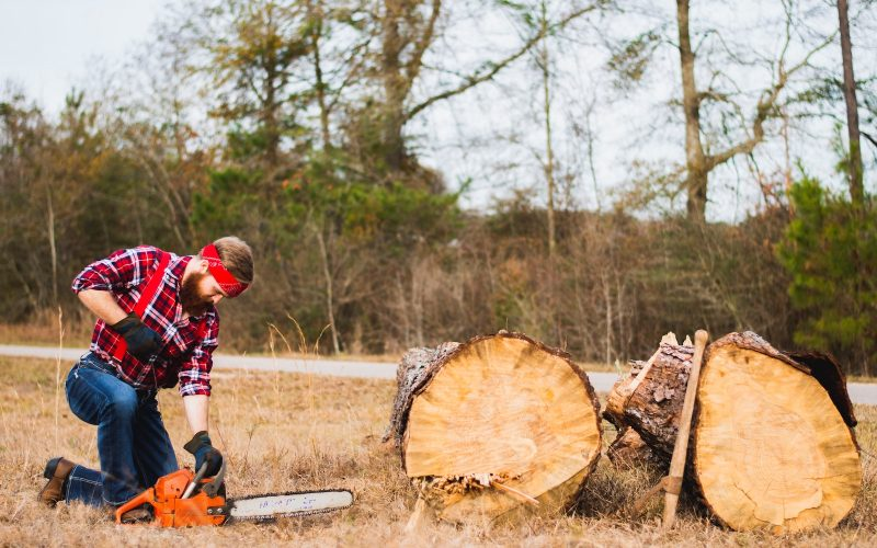 Everything you need to know about the cost of cutting down a tree
